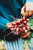 Hand holding radishes
