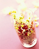 Pomegranate seeds and soya sprouts in glass