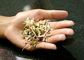 Hand holding dried lemon grass tea