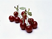 Sour cherries (can also represent wine bouquet)