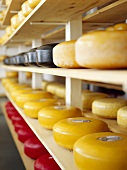Cheeses on shelves