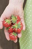 Fresh strawberries in someone's hand