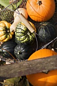 Assorted pumpkins and squashes in a basket