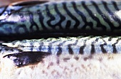 Perch and two mackerel (detail)