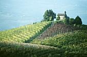 Chapel of Santo Stefano above Barolo vineyard, Piedmont, Italy