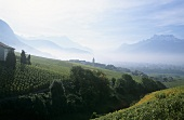 Wine-growing near Yvorne, Aigle, Vaud, Switzerland