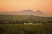 Morning around Helderberg, view of Table Mountain, S. Africa