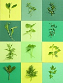 Twelve different fresh herbs