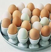 Various eggs in eggcups