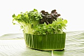 Mixed cress in banana leaf
