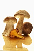 Chanterelle, ceps and button mushroom