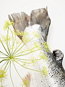 Dill flower with salmon tail
