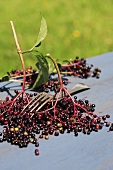 Elderberries with fork to strip them from their stalks on table
