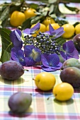 Hydrangea flowers surrounded by damsons and mirabelles