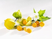Cape gooseberries with flower