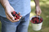 A handful and a bucketful of berries