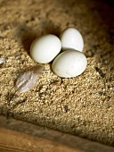 Three freshly laid eggs in a chicken coop