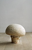 A mushroom on a wooden surface