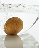 A brown egg in boiling water