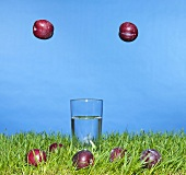 Plums falling on to grass, glass of water on the grass