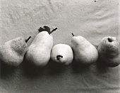 Five Williams pears (black and white photo)
