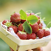 A Carton of Strawberries