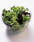 A Bowl of Assorted Lettuce