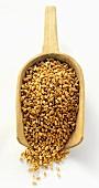Barley in a Wooden Scoop
