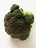 A Head of Broccoli