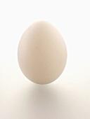 A Single White Egg