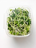 Fresh Alfalfa Sprouts in Plastic Container