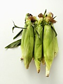 Three Fresh Ears of Corn