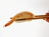 Chopsticks Holding Shrimp Sushi