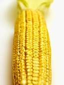 White Ear of Corn