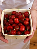 Holding a Box of Bing Cherries