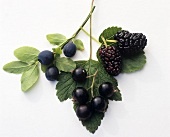 Mulberries, blackcurrants and blueberries