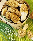 Morels in and beside woodchip basket, lilies-of-the-valley