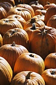 Many Pumpkins at a Farm