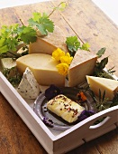 Assorted Cheese on a Tray