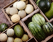Assorted Melons in Crates; From Above