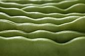 Green beans (macro zoom)