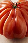 Single Ugly Tomato on White
