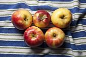 Mitsu apples (New Jersey, USA)