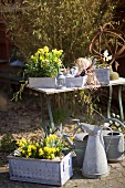 Spring flowers and a watering can in a garden