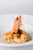Scampi on a bed of celery with chopped courgette and flowers