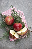 Red apples on pine sprigs