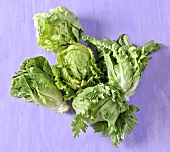 Two different lettuces