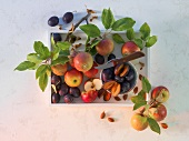 An arrangement of apples and damsons