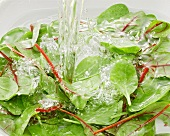 Spinach in water