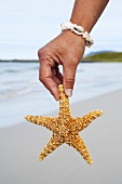Man's hand with a starfish